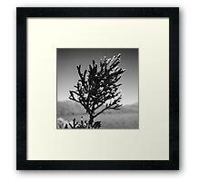 Pencil Pine, Tasmania Framed Print