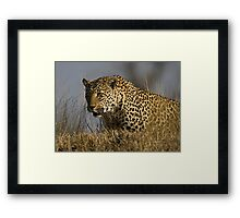 Female Leopard - Makwela Framed Print