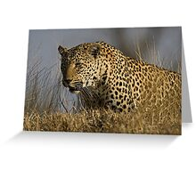 Female Leopard - Makwela Greeting Card