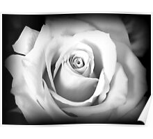 Single Rose in Black and White Poster