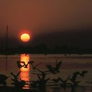 Sunbeam by Francis Drake