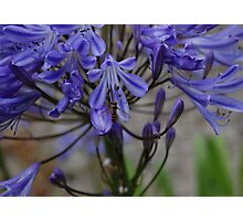 Blue in Bloom Photographic Print