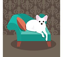 Flat design white Chihuahua on her chaise longue Photographic Print