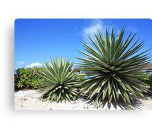 Aloe Vera plant at the beach Canvas Print