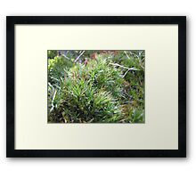 Green haven for trolls Framed Print