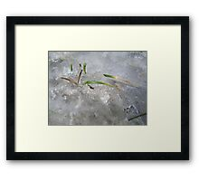 blades of grass in ice Framed Print