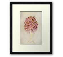 Allium Pink Jewel Framed Print