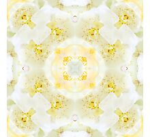 Nature Mandala XI Photographic Print