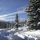 Snowy Trail - Photo by Tom  Reynen