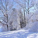 Snowy Trees by Tom  Reynen