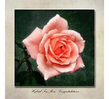 Tea Rose, Congratulations Photographic Print