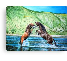 Strong spirits of the steppes Canvas Print