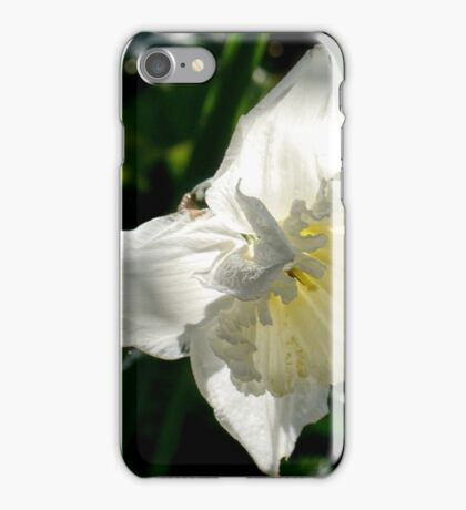 Daffodil in Dappled Light,,,,,,,,Dorset UK iPhone Case/Skin
