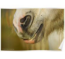 Equus Ferus Caballus - Horse's Mouth Detail | East Hampton, New York Poster
