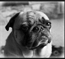Pug Mug by lawrence Fawcett