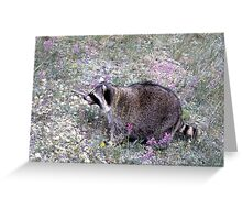 Springtime in the Rockies (with Raccoons!) | Stanleigh and Friends Greeting Card
