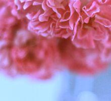 Pretty pink roses Sticker