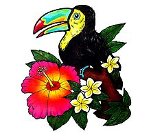 Tropical Toucan (Colour) Photographic Print