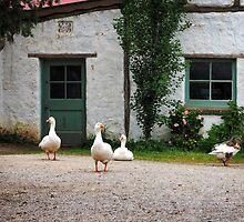 Monsalvat Geese by Karen E Camilleri
