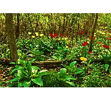 Green, Yellow and Red - Tulip Forest Impressions  Photographic Print