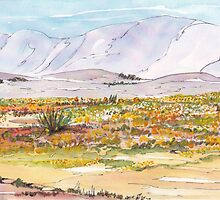 Lente in Namakwaland / Spring in Namaqualand by Maree Clarkson