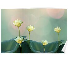 Serene Dreamy Lotus Pads Soft White Water Lilies Poster