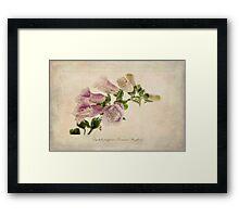 Digitalis purpurea (Common Foxglove) Framed Print
