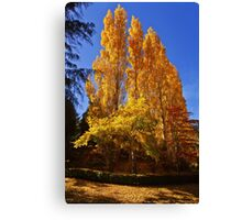 Autumn gold - Mount Macedon Canvas Print