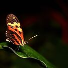 Butterfly III by Daniela Pintimalli