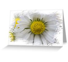 white daisies in spring Greeting Card