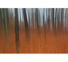 tollohill woods abstract Photographic Print
