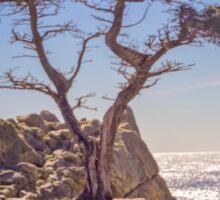 Lone Cypress - Pebble Beach - California - USA Sticker