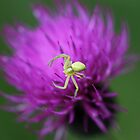 Incy wincy spider by cuprum