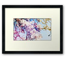 Cherry flowers Framed Print