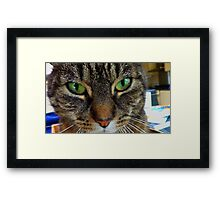 My cat miepje Framed Print