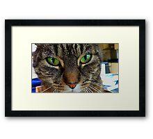 My cat miepje Framed Print