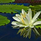 The Art of the Water Lily by Marilyn Cornwell