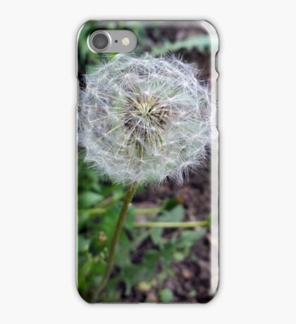 dandelion bloom iPhone Case/Skin