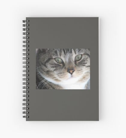 Tabby Eyes Spiral Notebook
