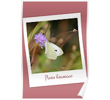 "Polaroid ""white butterfly"" Poster"