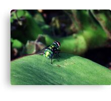 Emerald Canvas Print