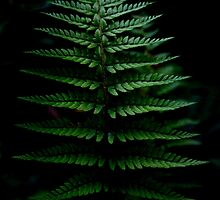 Fern by Silvia Tomarchio