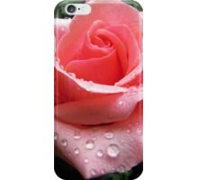 Pink Rose with Dew  iPhone Case/Skin