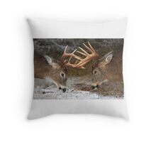 Clash of the Titans - White-tailed Bucks Throw Pillow