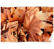 Autumn Leaves - Margaret River, Western Australia Poster