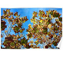 Coloured Autumn Leaves Poster