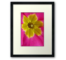 Pink and Yellow Primrose Macro Framed Print
