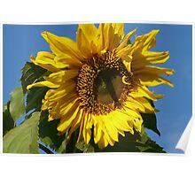 Sunny Sun Flower Poster