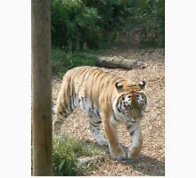 Tigers Animals Unisex T-Shirt