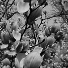 Spring in black and white..in a brave new world by jammingene